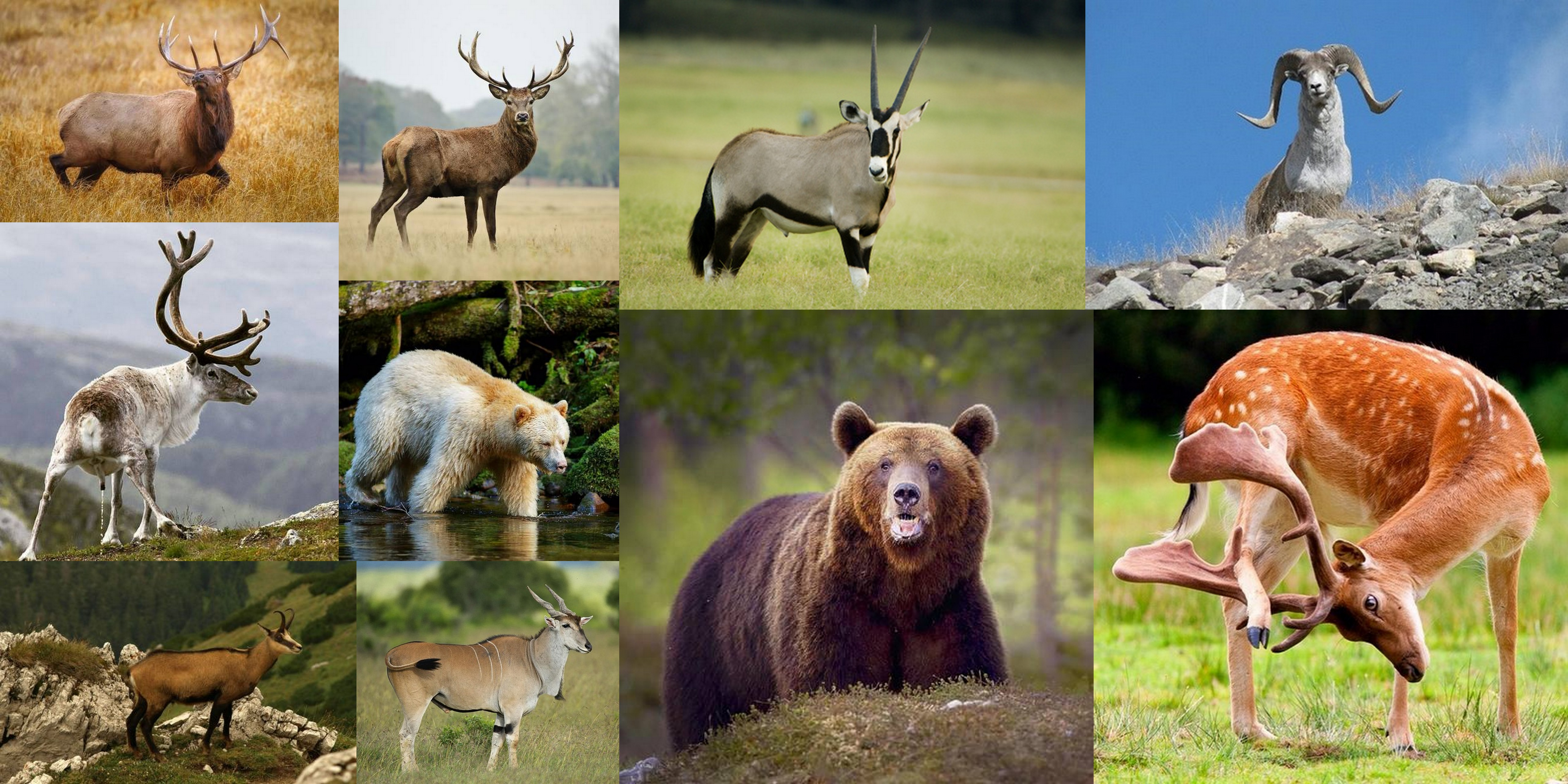 Rifle Woods Deer A Hunting Lesson For The Novice Social Matter To Shoot With Diagram I Have Two Of These Rifles And Lastly Big Game Eg Elk Pronghorn Moose Bear Are Generally Hunted Bolt Action Many Feature More Powerful Or Flatter Shooting