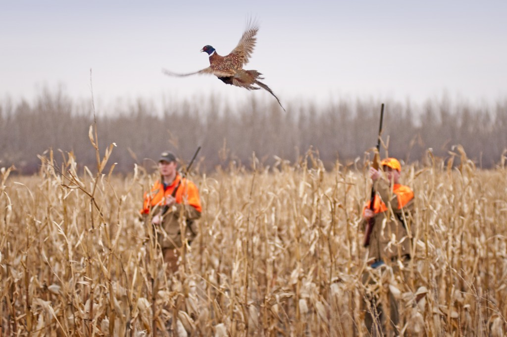 south-dakota-pheasant-hunting5