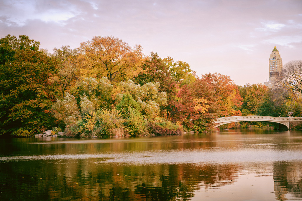 New York Autumn - Central Park - Bow Bridge and Fall Foliage -XL